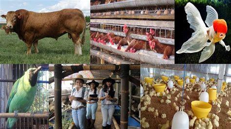 peluang usaha bisnis ternak   menguntungkan