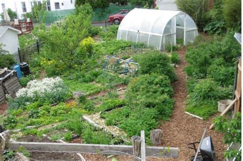 profitable backyard farming 10 most profitable crops to grow in your backyard