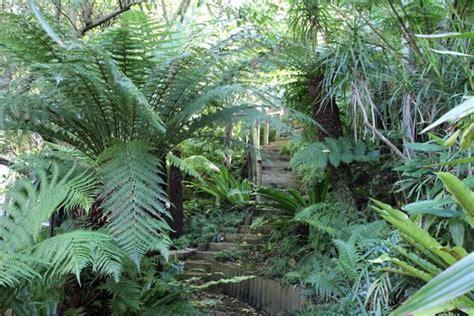australian native garden design ideas australian outdoor living