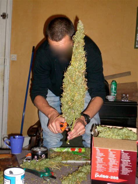 canapé d exterieur 5 vari 233 t 233 s productives de marijuana pour ext 233 rieur