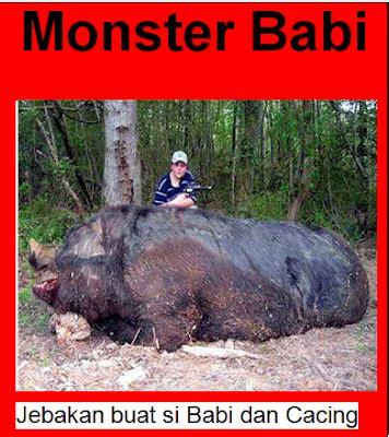 Cacing Pekanbaru mister rakib pekanbaru riau indonesia daging babi