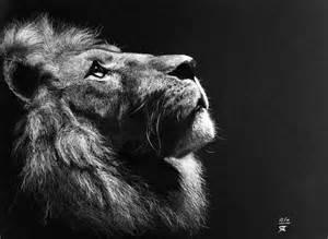 Galerie de coloriages gratuits coloriage adulte tete lion 3