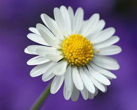 l 礙 un fiore in un fiore su raggio di sole