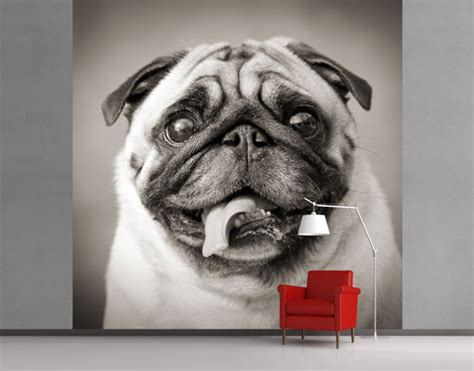 pug wallpaper for walls pug wallpaper for walls 4 free wallpaper dogbreedswallpapers