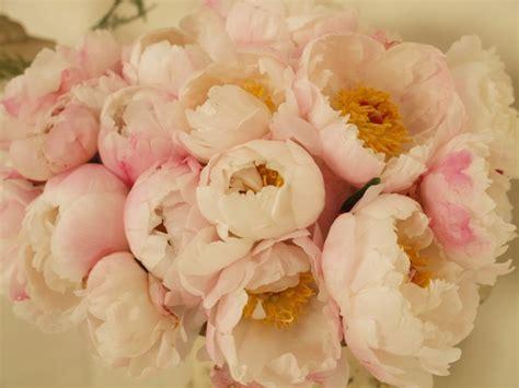 fiori per matrimonio a luglio i fiori pi 249 belli per un matrimonio silviadeifiori