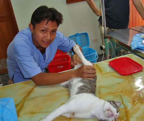 cost of spaying a cost of spaying and neutering a cat