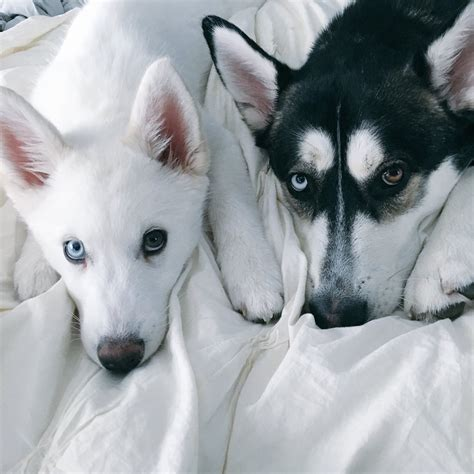 joey graceffa s dogs wolf and so together if you dont these dogs they are joey s dogs the