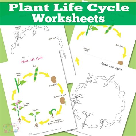 the cycle of a plant worksheet plant cycle worksheet itsy bitsy
