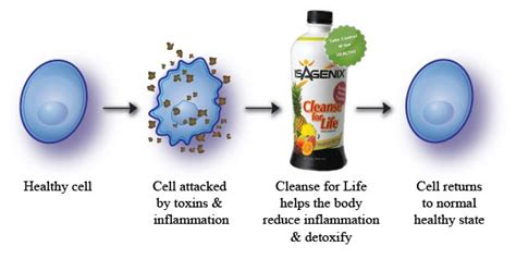 Cleansing Effects Of All Cell Detox by Benefits Of Cellular Cleansing Karenville