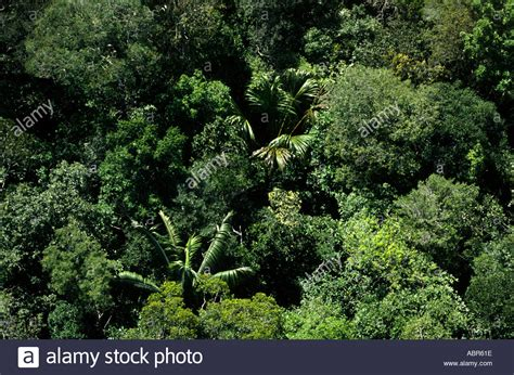 amazon awnings rainforest canopy plants www pixshark com images galleries with a bite