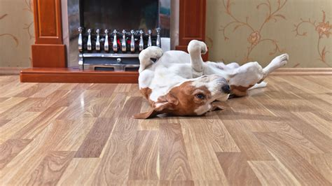 what is the best flooring for dogs and other rambunctious