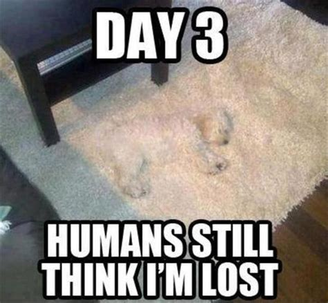 Lost Meme - day 3 humans still think i m lost they still do not