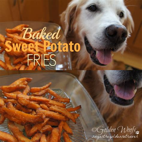 dogs and sweet potatoes sweet benefits of sweet potato for dogs golden woofs