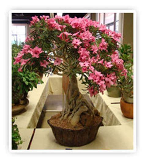 Hiasan Pot Anggrek cara menanam bunga hiasan tanamanbaru