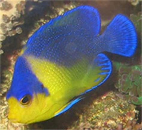 aquarium design vorschläge reef filtration methods marine aquariums and coral reef