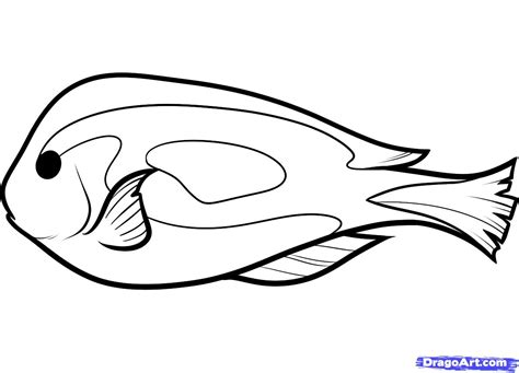 draw drow how to draw a blue tang step by step fish animals free