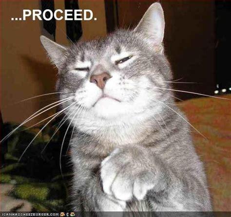 kumpulan gambar foto kucing lucu gokil terbaru 2014 187 terbaru 2014