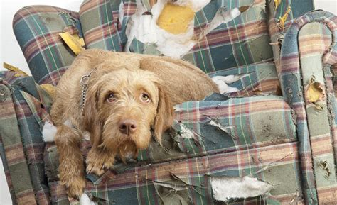 signs of separation anxiety in dogs easing canine separation anxiety
