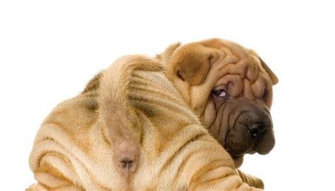 when should i neuter my puppy should i neuter my