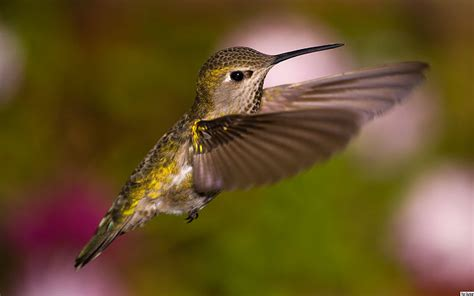 can i install hummingbird flying on a christmas tree plant a garden in oregon to attract hummingbirds