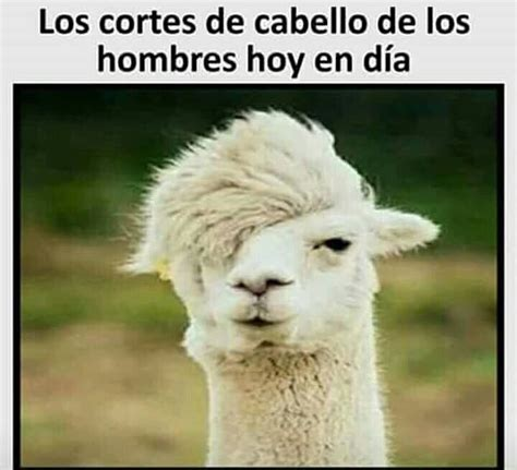 imagenes de amor para celular gratis en español m 225 s de 25 ideas incre 237 bles sobre imagenes de animales