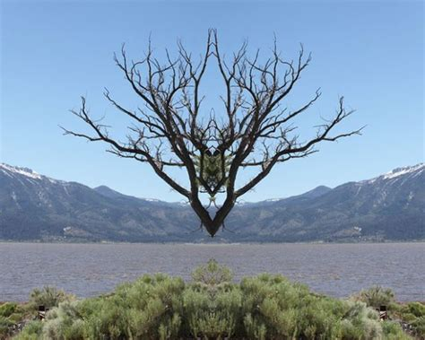Mirroring Trees mirrored tree photos show another world dominated by trees
