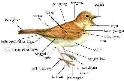kingdom animalia biologi indonesia