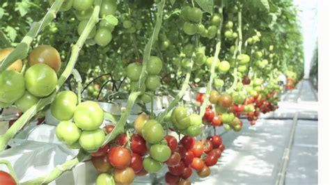 home town farms vertical organic urban farming youtube