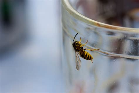 wespen im garten vertreiben wespen vertreiben wespennest entfernen garten tipps
