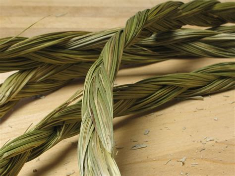 What Plants Keep Mosquitoes Away by Sweetgrass As Mosquito Repellent Research Catches Up To