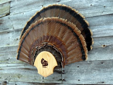 how to mount a turkey fan fan display turkey fan turkey fan display