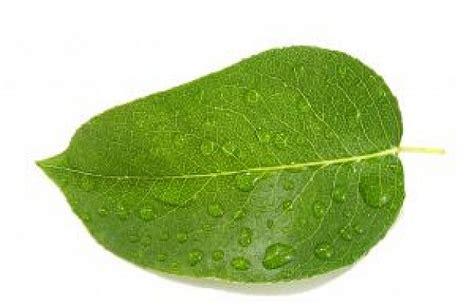 imagenes hojas de sen las hojas mojadas 5 descargar fotos gratis