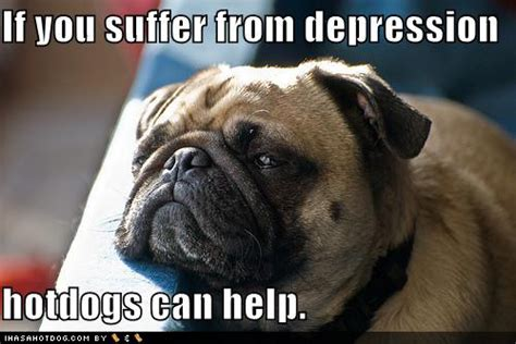 Depressed Pug Meme - animals musings of an overanalytical mind