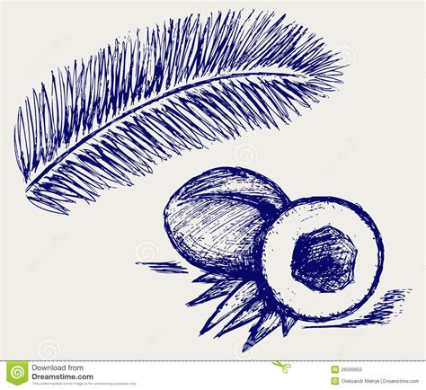 how to create palm tree in doodle god coconut and palm tree royalty free stock photo image