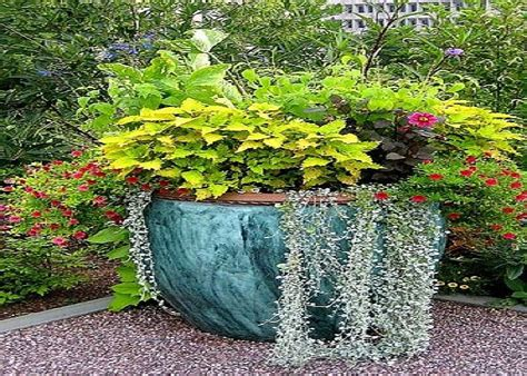 Plant Pot Ideas For The Patio by 98 Best Images About Flower Pot Gardens On