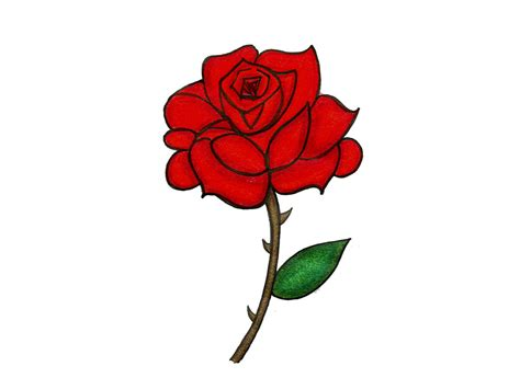 cartoon rose tattoo knumathise realistic drawing images