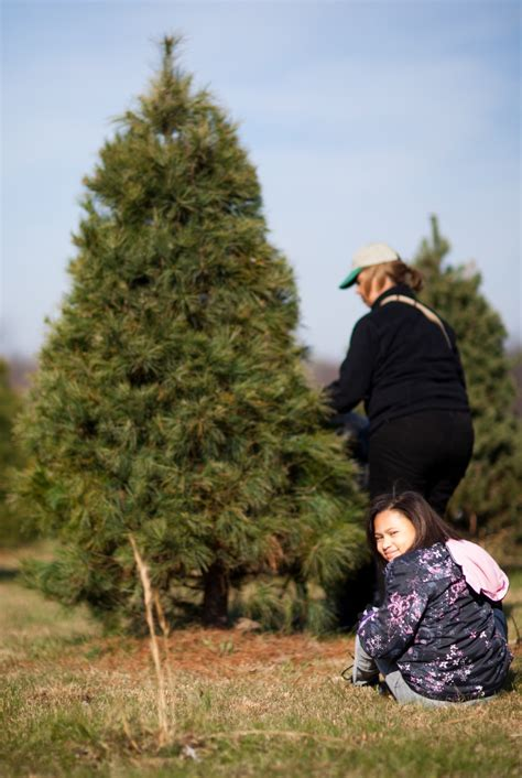 dvids images organizations donate christmas trees to