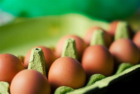 georgina verbaan vegan researchers aim to further enrich eggs poultry meat with