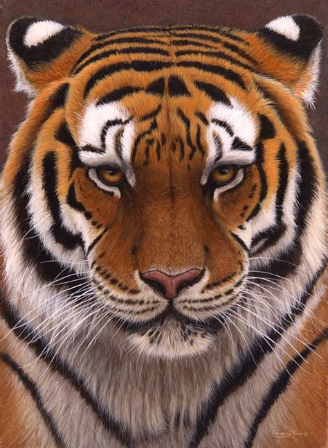 printable tiger eyes 17 best images about paintings of lions and tigers on