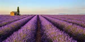 winterharte orchideen im eigenen garten echter lavendel standort pflege 252 berwintern schneiden