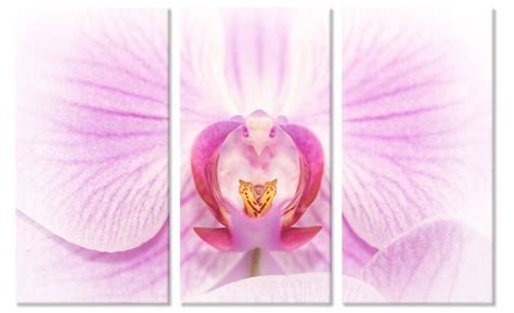 E 6645 Kanvas D 4 5 drieluik canvas schilderij roze orchidee bloemen