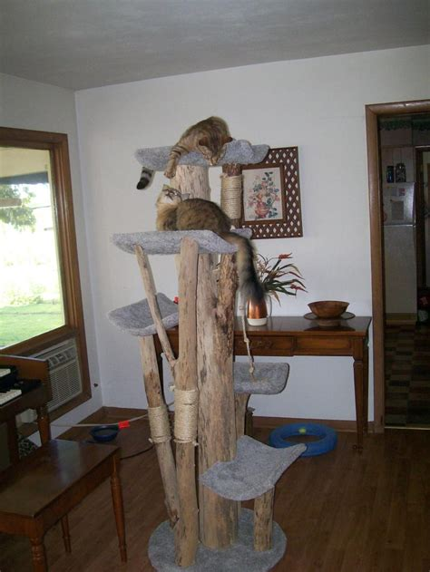 unique tall cat trees homesfeed