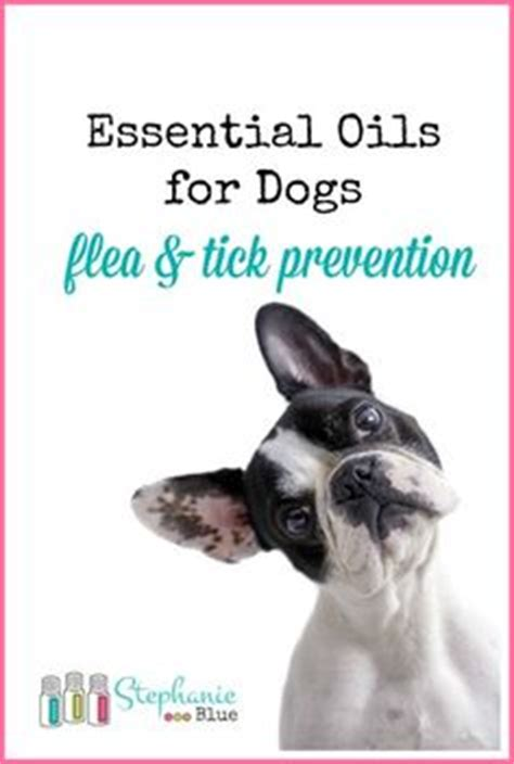 is eucalyptus safe for dogs tick repellent for dogs flea and tick and ticks on