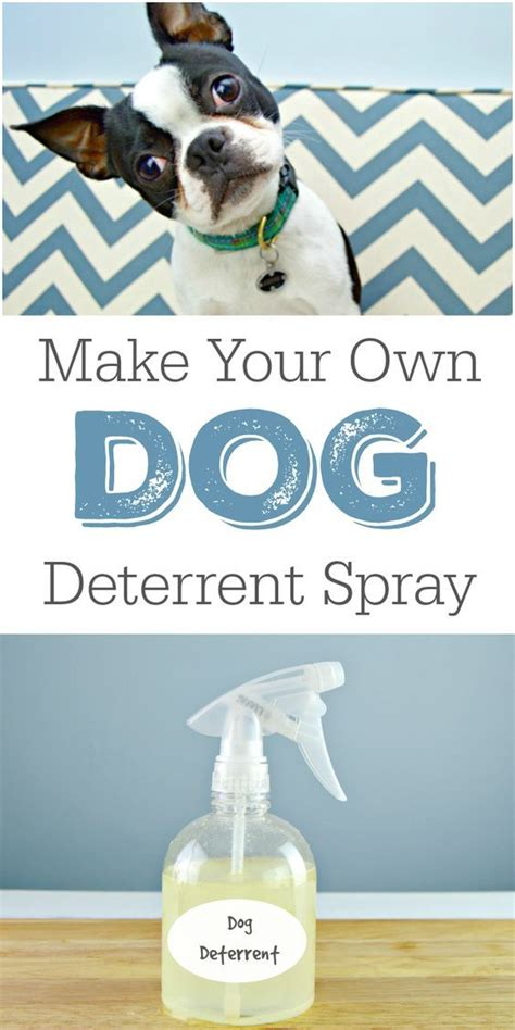 house smells like dog best 20 indoor dog houses ideas on pinterest indoor dog rooms dog room design and