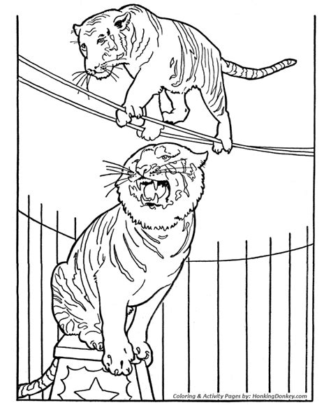 circus tiger coloring page circus tiger coloring page tiger on tight rope