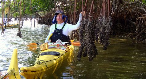 ten thousand steps challenge sea kayaking courses in florida outward bound