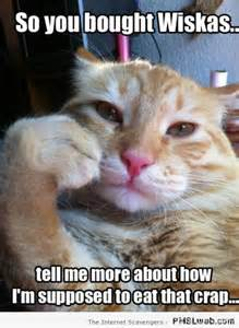 Cate Meme - hilarious cat pictures praising feline glory with a
