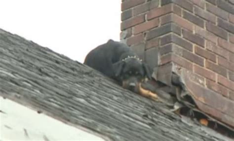 dog on a roof ohio firefighters save malnourished dog stranded on home s