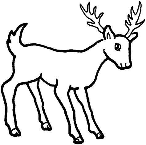 simple deer coloring pages wild animal pencil drawings archives drawings inspiration