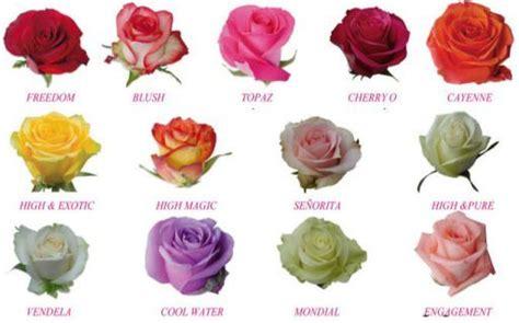 imagenes de flores naturales con sus nombres leer los nombres de flores con imagenes para conquistar
